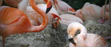 schwule Flamingos